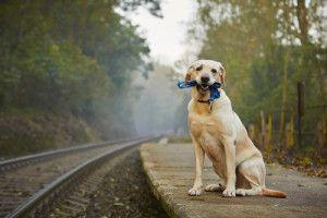 12 Dog Breeds Prone To Separation Anxiety