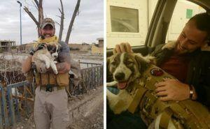 British Veteran & The Dog He Rescued In Syria Reunite After 7 Months Apart