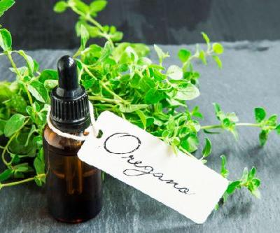Oregano Oil for Dogs: What to Know