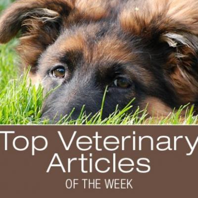 Top Veterinary Articles of the Week: Cuterebriasis, and more