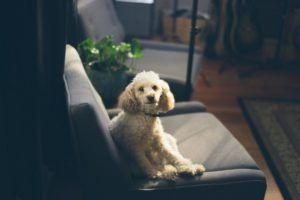 Ask A Groomer: 5 Secret Hacks For Grooming Your Dog At Home