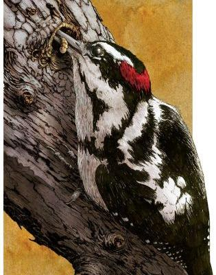 Gallery: A Downy Woodpecker's Swiss Army Beak