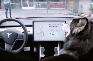 Tesla Cars Get New Dog And Sentry Modes