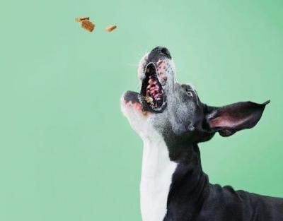 How Do I Help My Dog's Skin Allergies And Irritation?