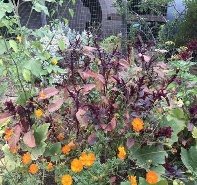 Garden Notes September 2018: Wreaths and Seeds and Melons That Might Have Been
