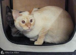 Alley Cat Allies Helps Cats as Wildfires Ravage California