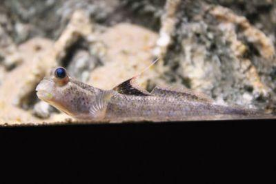 Three Types Of Habitats For Your Mudskipper