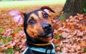 8 Foolproof Steps To Prevent Ear Infections In Dogs