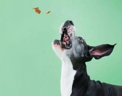 What Dog Treats Are Low In Fat?