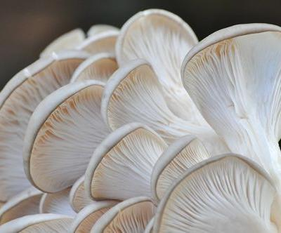 Succeeding where Big Pharma failed: Plant-based nutrients in mushrooms and tea found to delay cognitive decline linked to Alzheimer's