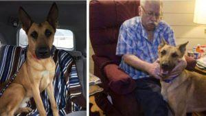 """Innocent Service Dog Avoids The """"Death Penalty"""" Thanks To DNA Evidence"""