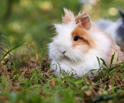California Lawmakers Pass Bill Banning Animal-Tested Cosmetics