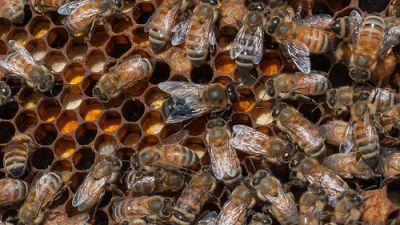 Honey: A Sweet Topic with New Data this Spring