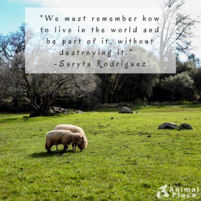 By refusing to destroy our fellow animals, we decrease our