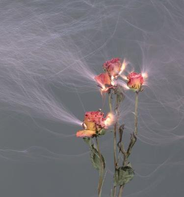 Freshly Cut Flowers Make Sparks in Electrically Charged Images by Hu Weiyi