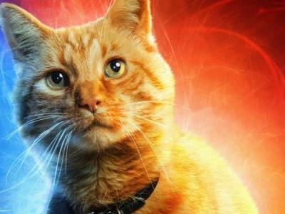 Avengers: Endgame Fan Poster Replaces Every Hero With Goose the Cat