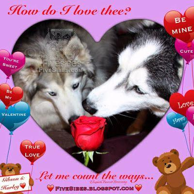 FiveSibes Lovebirds Valentine Flashback & Simple Ways to Shower Your Dog with Love!