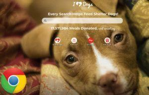 Use Google Chrome? This Little Trick Will Donate to Animal Rescues Every Time You Do a Search
