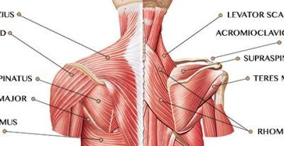 Shoulder Muscles: How to Improve Function and Avoid Pain