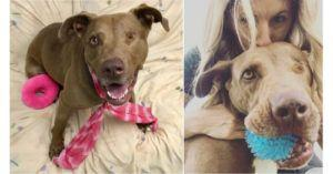 After over 1,450 Days in a Shelter, Penny Just Wants a Forever Home. And a Tennis Ball
