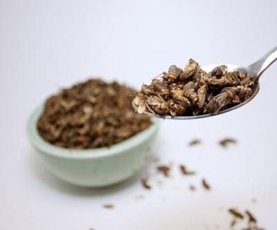 Daily cricket consumption may alter gut microbiota, clinical trial suggests