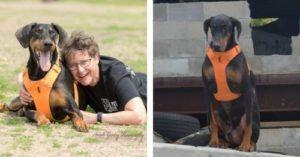 Dog Overcomes His Disease, Wins National Search And Rescue Award