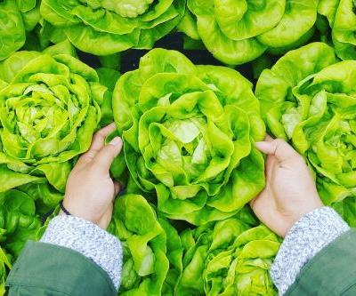 Organic vs Conventional Produce: How They Affect Your Hormones