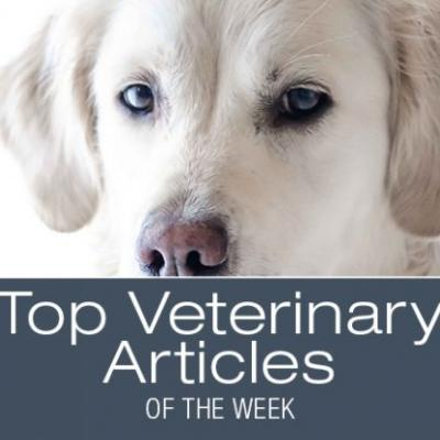 Top Veterinary Articles of the Week: Sepsis, Intussusception, and more