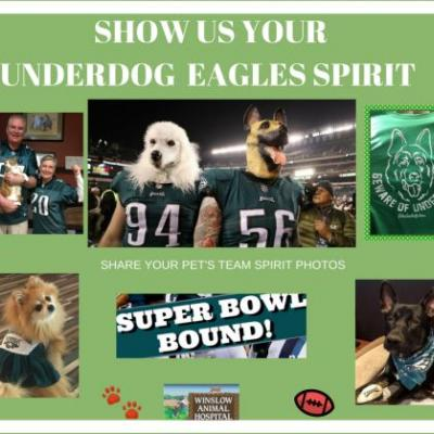 "Celebrating the ""Underdog"" Eagles 