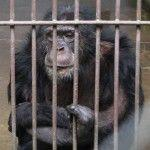 King Kong Zoo Permanently Shut Down After Being Sued by The Animal Legal Defense Fund