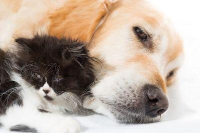 Cats and Dogs in Apartments: 5 Tips for Getting Along