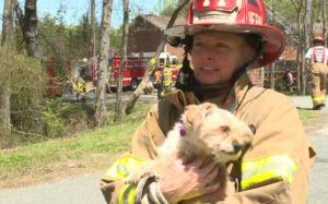 Grieving Firefighter Rescues Pup One Day After Losing Her Own Dog