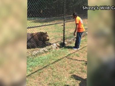 Wild cat sanctuary owner reacts to lion attack in NC