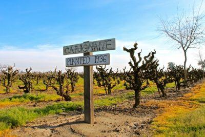 Is ancient vine Carignan ready for its star turn?