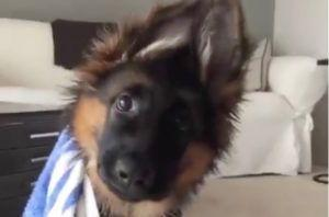 Watch This Floppy-Eared Puppy's Reaction To Hearing A Strange Noise