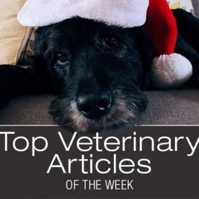 Top Veterinary Articles of the Week: Holiday Dangers