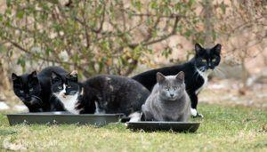 Des Moines, Iowa, Passes TNR with Support from Alley Cat Allies