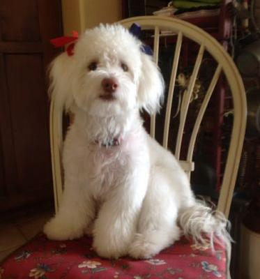 """Testimonial: """"MISTY"""" our rescue puppy"""