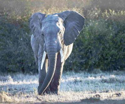 Paul Goldstein: The truth about Botswana's elephant-hunting backslide