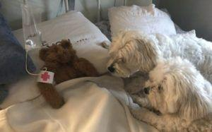 Hilarious Dog Dad Plays Doctor To Pup's Favorite Toy