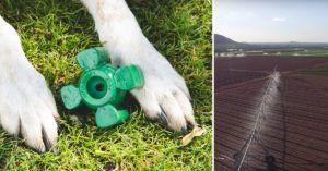 Farmers Have Kept This Insanely Durable Dog Toy a Secret for 12 Years!