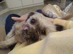 """Senior Dog with a """"Different"""" Face Mends Woman's Broken Heart"""