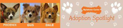 Adoptable Dogs of the Month