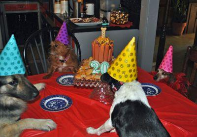 Woman Honors Mother's Dying Wish By Throwing Birthday Bash For Dog