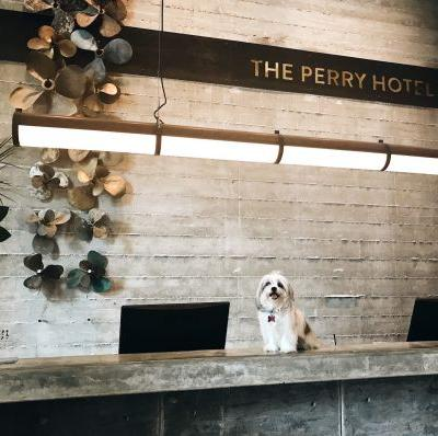Favorite Dog-Friendly Hotels in the US