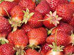 A pint of strawberries a day can stave off breast cancer