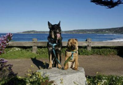 GoPetFriendly Visits California's Top Pet Friendly Attraction: Carmel Beach