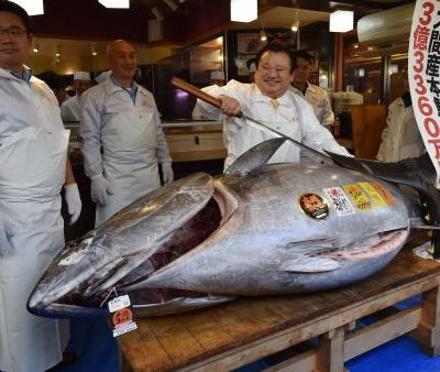 Massive 612-pound tuna sells for record $3.1 million