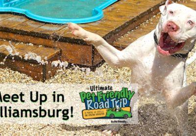 GoPetFriendly Meet Up in Williamsburg, VA on May 6th!