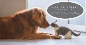 How To Safely Introduce A Cat To Your Dog Home
